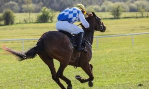 Droit des sports équestres Paris