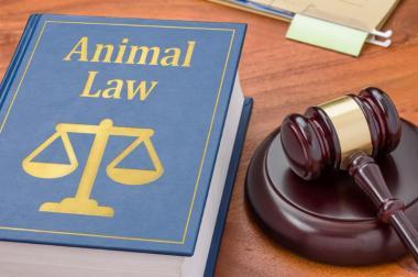 Avocats Droit des animaux Paris