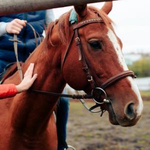 sports équestres et hippiques