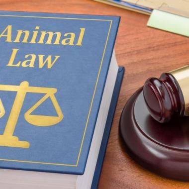 Droit des animaux